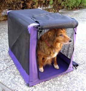 etrambus-viajar-con-animales